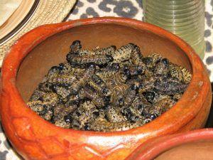 platillos-extranos-termitas